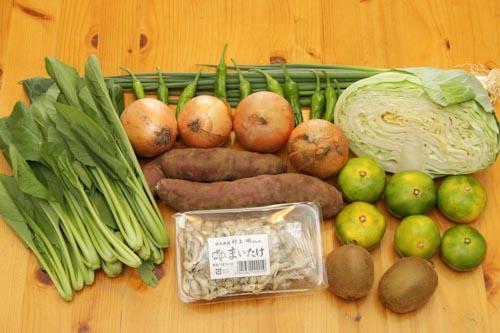 らでぃっしゅぼーやのバラエティ野菜果物S(玉葱、サツマイモ、キャベツ、小松菜、葉ねぎ、ししとう、まいたけ、極早生みかん、キューイフルーツ)